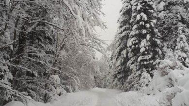 Photo of Sindikat šumarstva uputio apel za zaštitu radnika od hladnoće