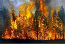 Photo of Izazivanje požara prozrokuje oštećenja i uništenje  dijelova nadzemne visokonaponske i niskonaponske mreže